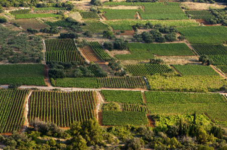 wineries-croatia.jpg