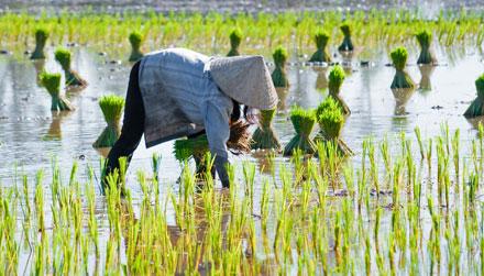 Vietnam Travel Guide Expert Picks For Your Vietnam