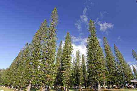 5 Reasons to Go to Lanai, Hawaii