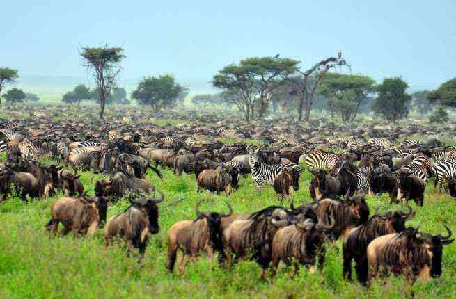 Top 10 African Safari Tour Operators – Fodors Travel Guide