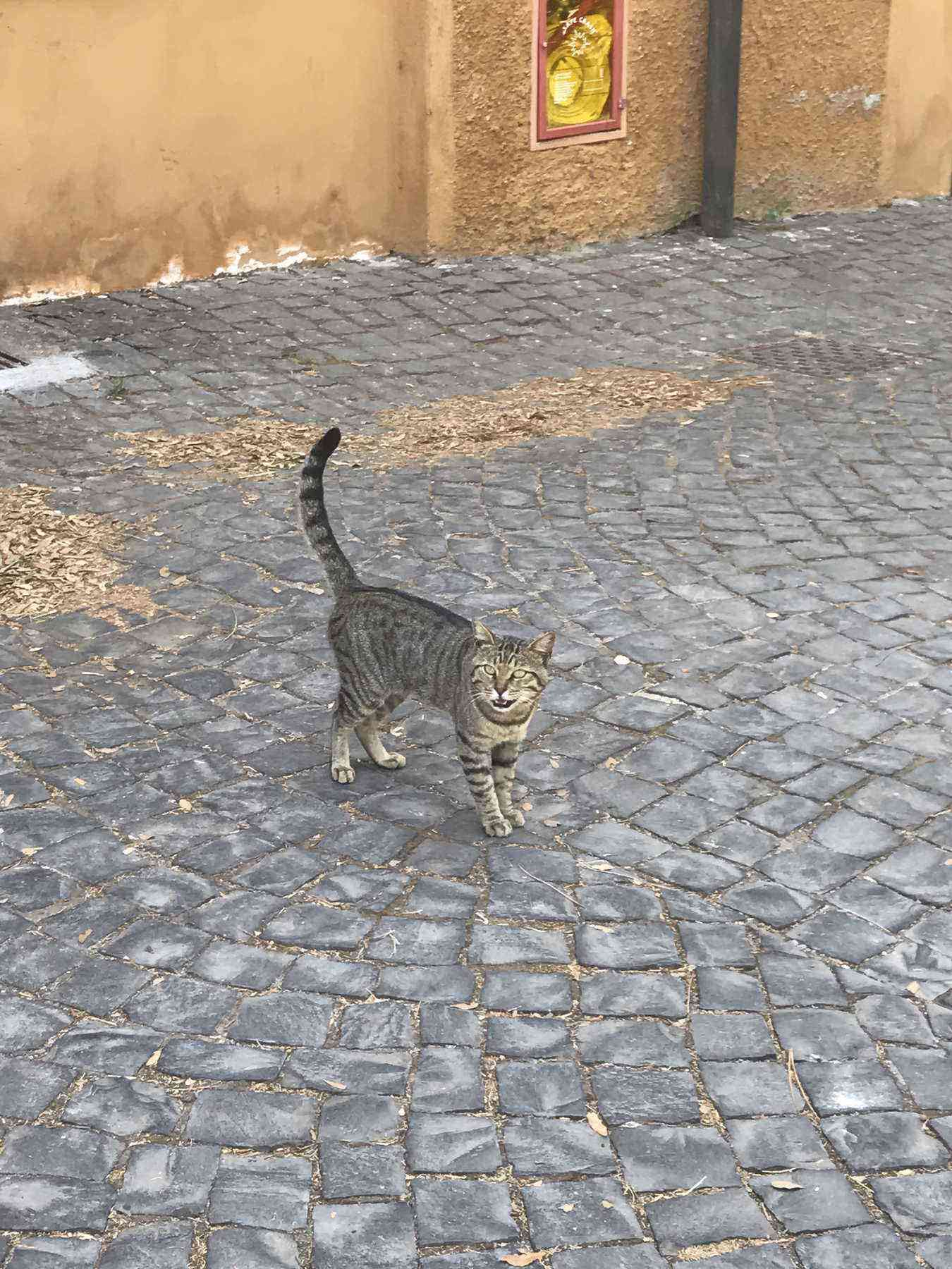 One of the property's seven cats