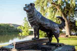 Memorable Mutts: 11 Dogs Monuments Around the World