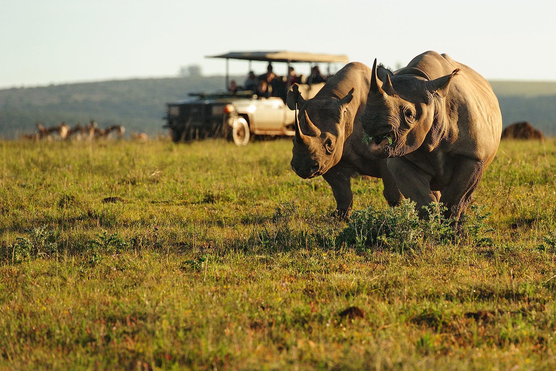 7 Resorts That Help Animals