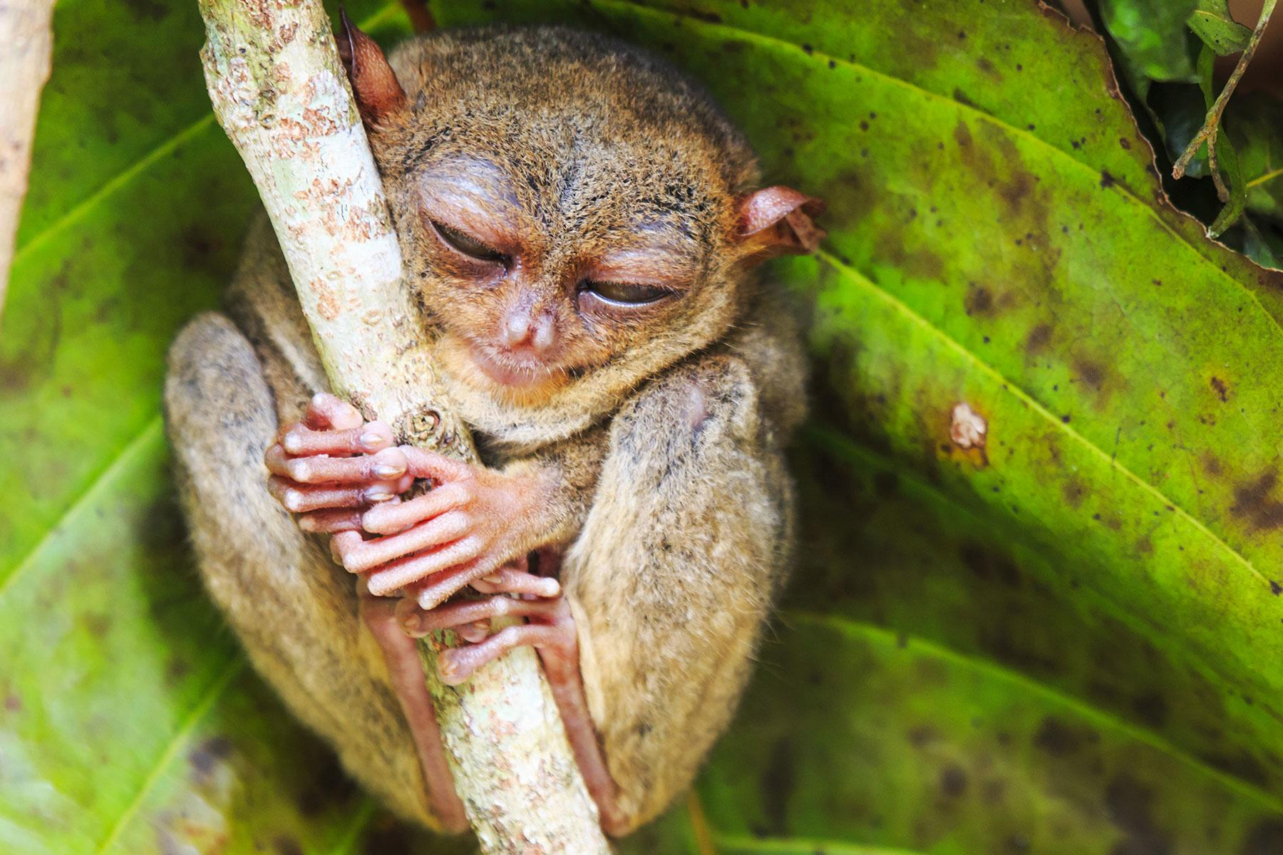 12 Unusual Experiences You'll Only Find in the Philippines
