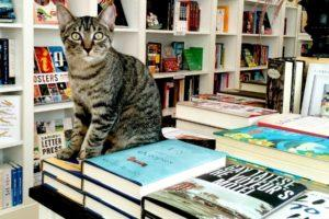 17 Bookstore Cats Worth Road Tripping For