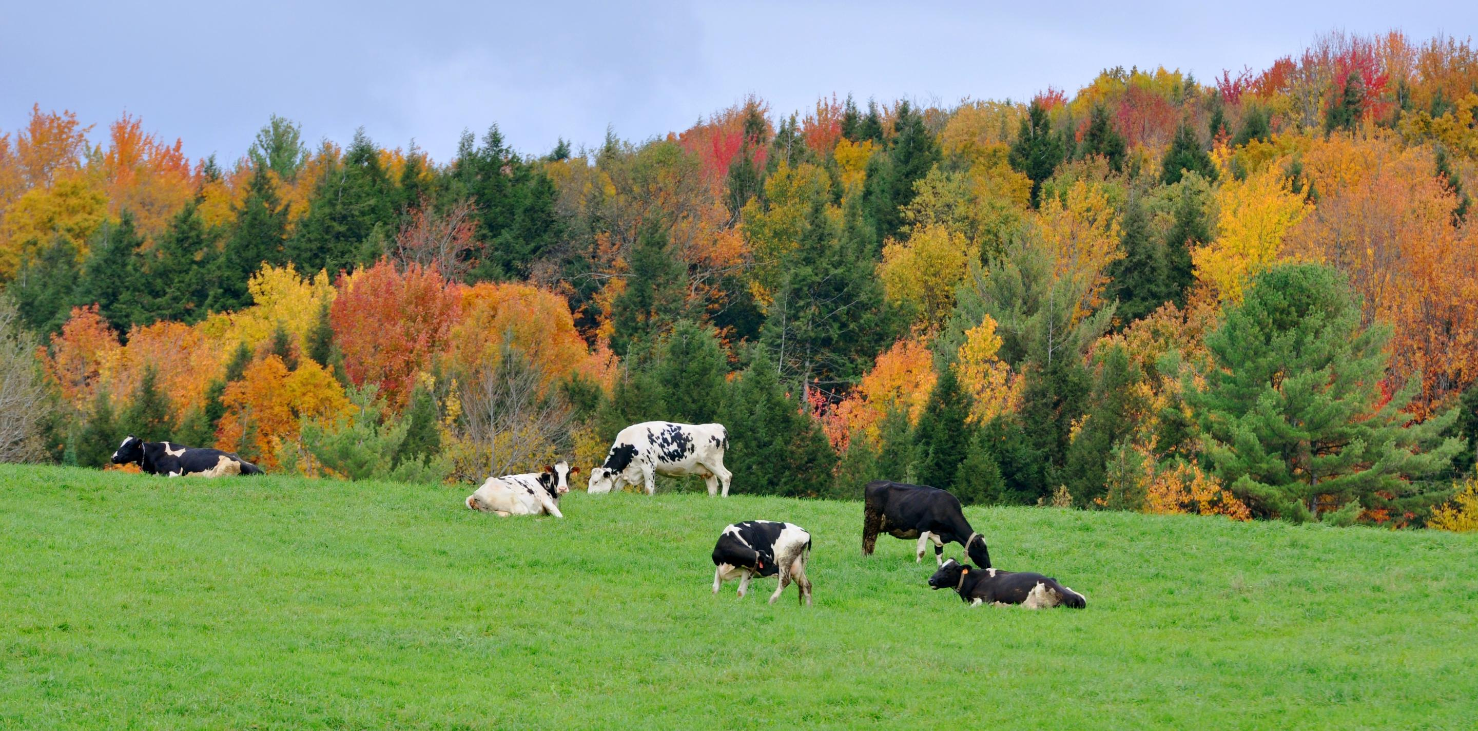 Latest News about Vermont | Fodor's Travel
