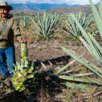 Reasons-To-Visit-Oaxaca-Sip-Mezcal-Authentic-Distillery-1