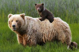 From Mild to Wild: How to See Alaska's National Parks