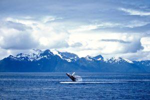 12 Things You Absolutely Need to Do on an Alaskan Cruise
