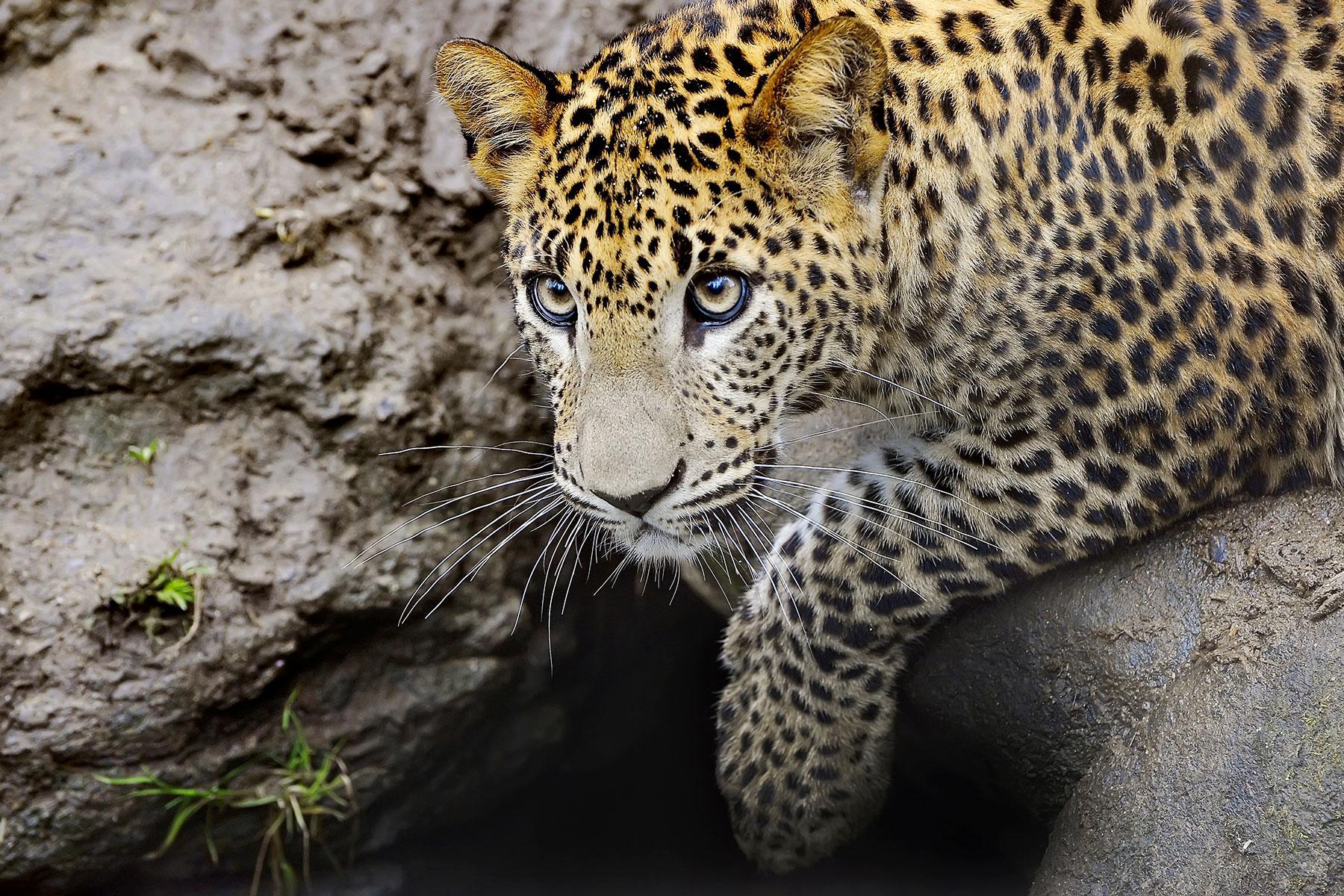 12 Amazing Animals To See In Sri Lanka Ndash Fodors Travel Guide