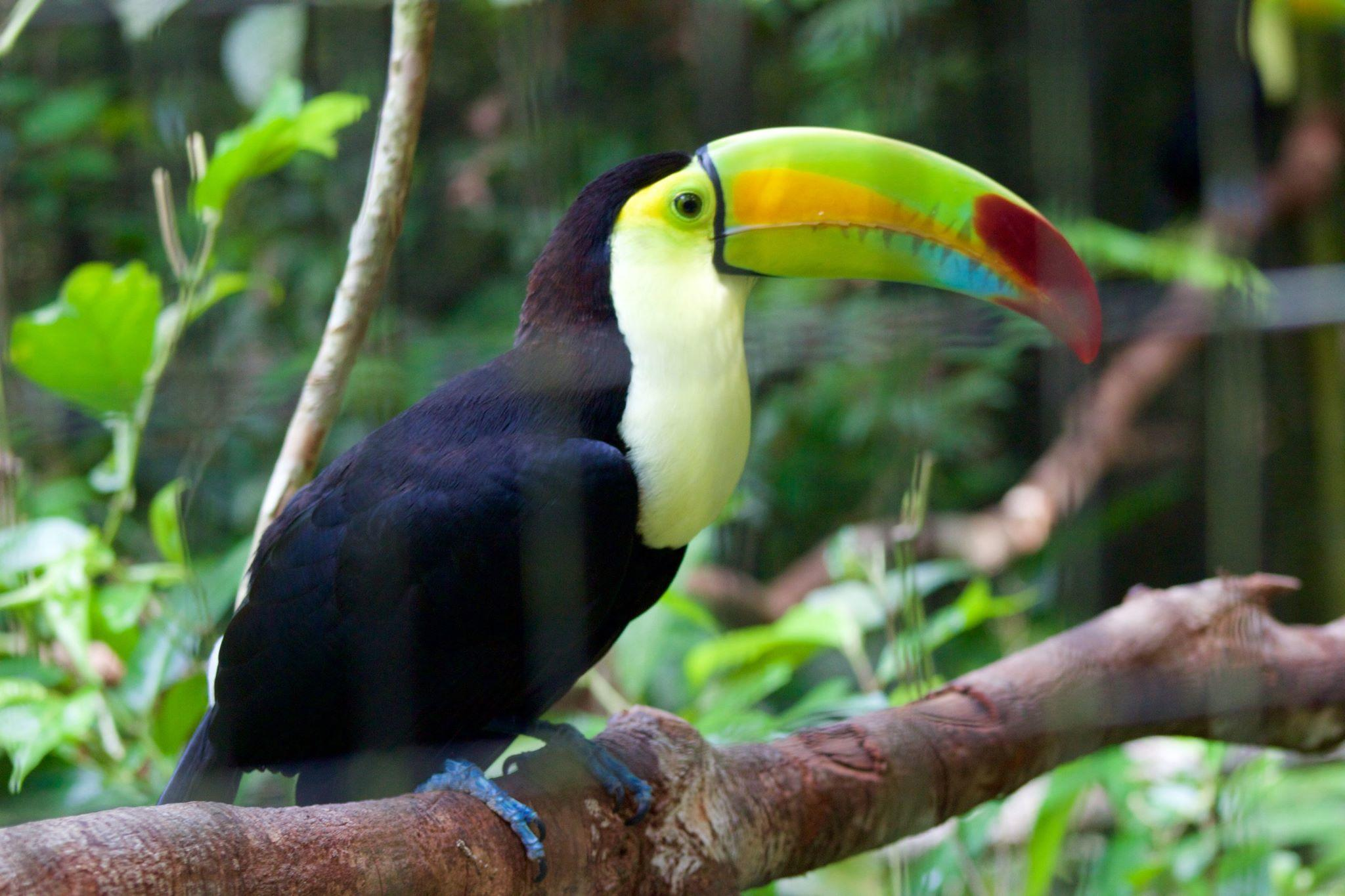 14 Ways To See Wildlife In Belize Fodors Travel Guide