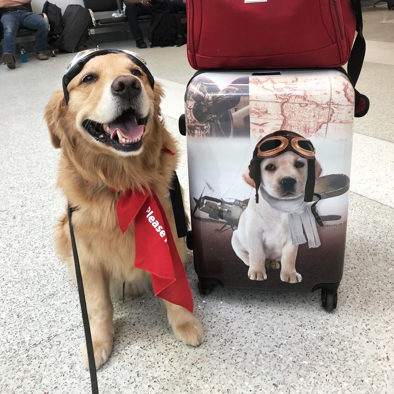 GREAT DANE  Named Set Of 6 Dog Photo Trade Cards