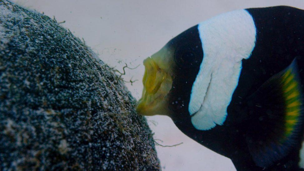 BPII_EP03_Coral Reefs_Grab_23_resized