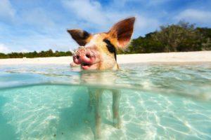 Ultimate-Things-To-Do-Bahamas-Hero