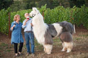 Wine-Llamas-HERO-1