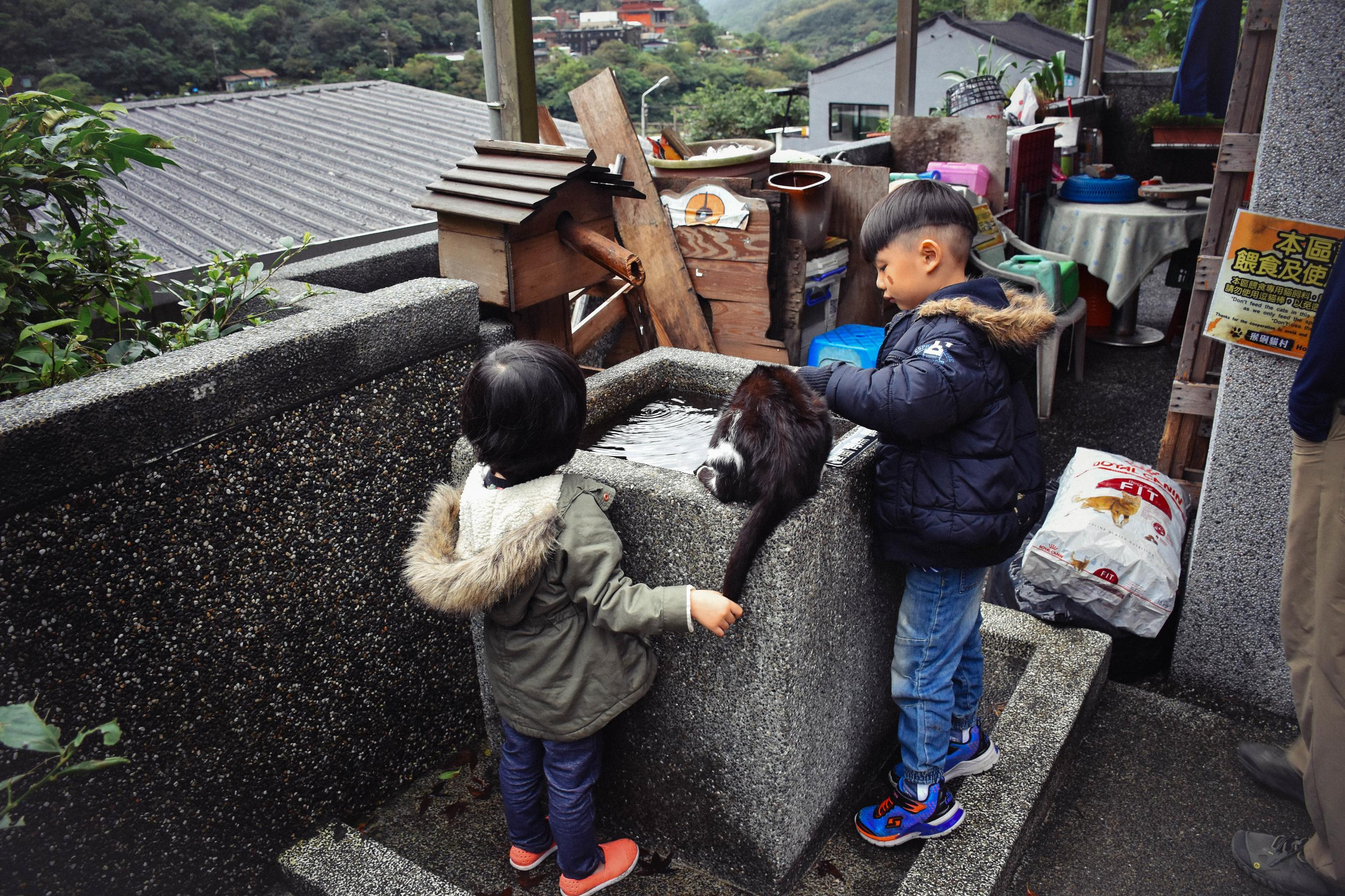 kids-petting-cats_26940709129_o