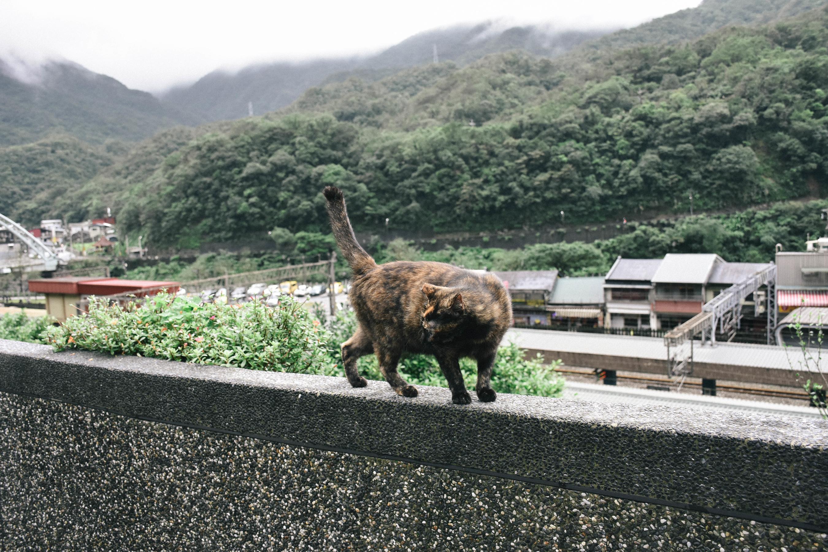 cat_24843484988_o