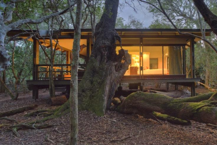 Phinda-Forest-Lodge-Guest-Suite