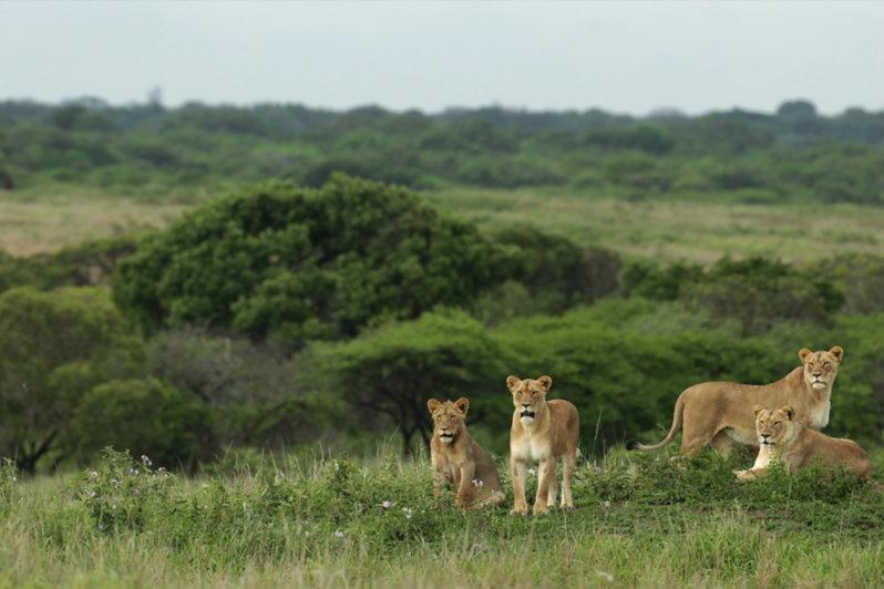 Wildlife-at-Phinda-Private-Game-Reserve (7)