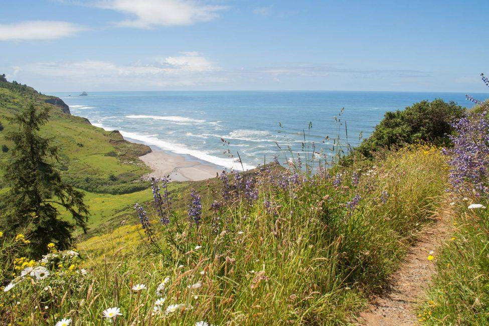 lost_coast_pathdown_ocean_view