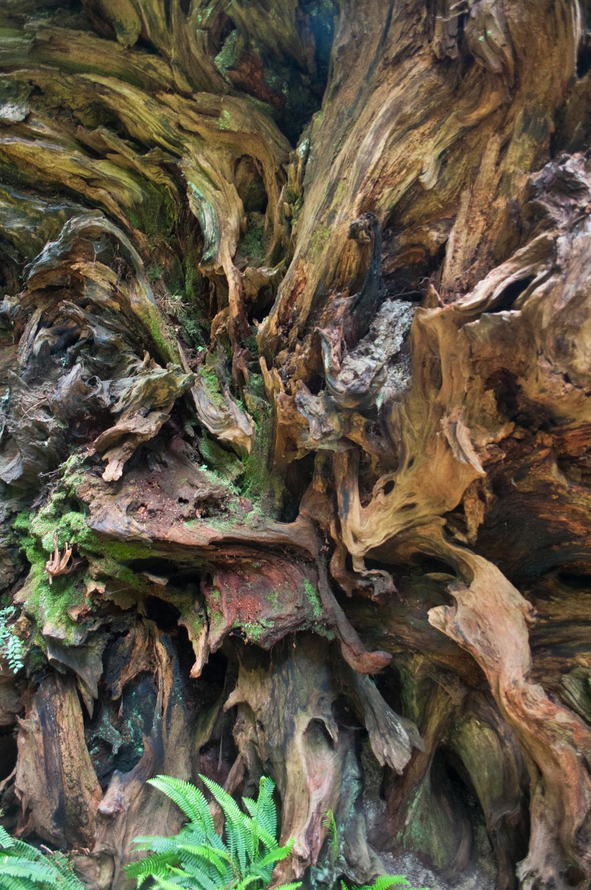 redwood_trunk