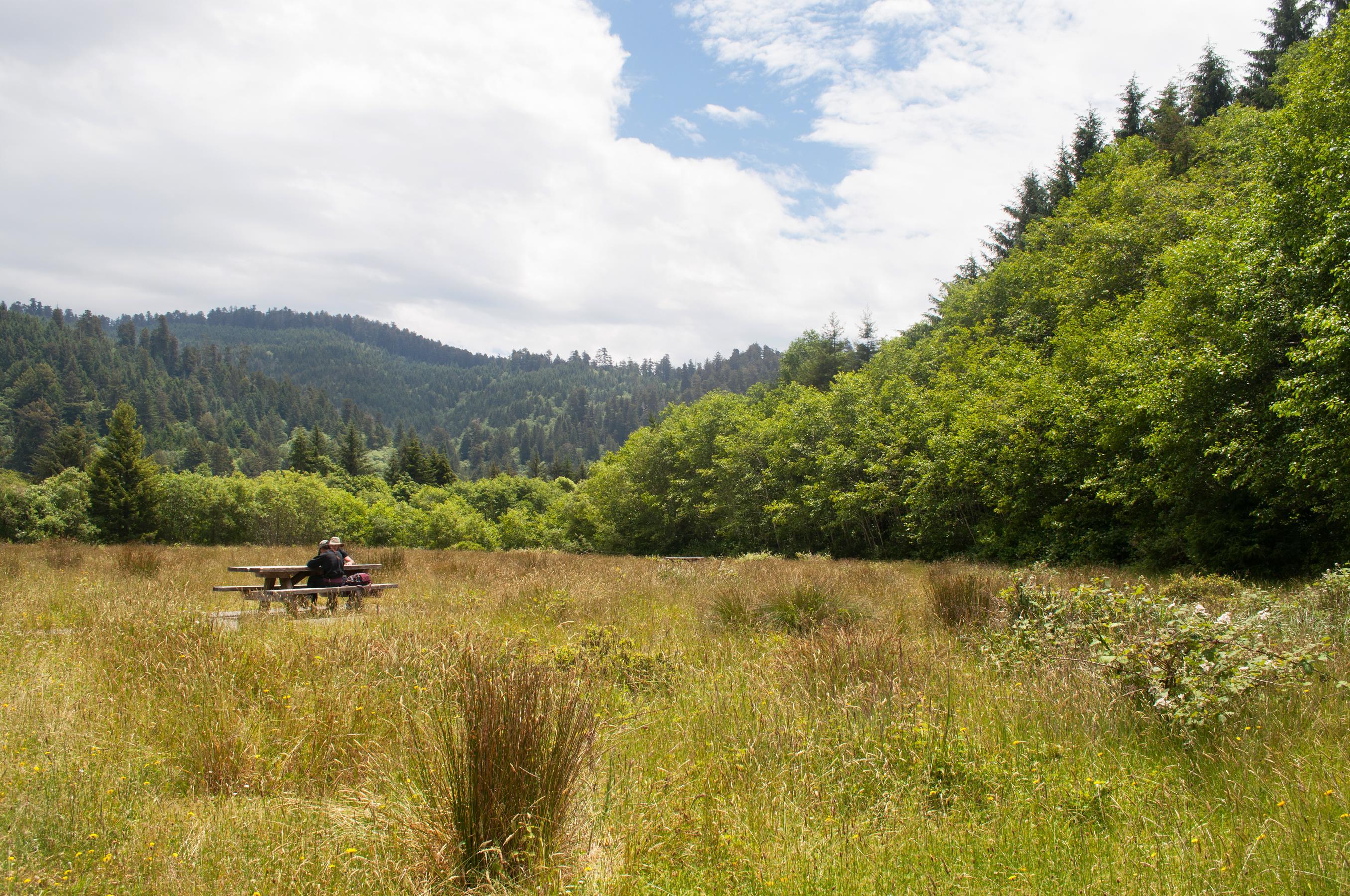 redwoods_national_park