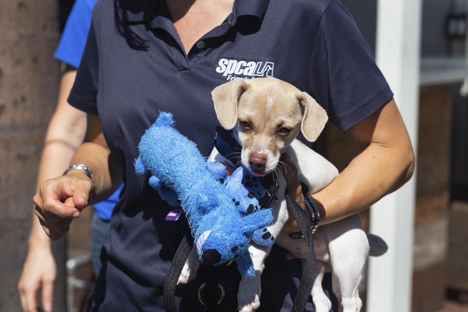 SPCA_Dog