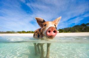 10 Animals To Meet In The Bahamas