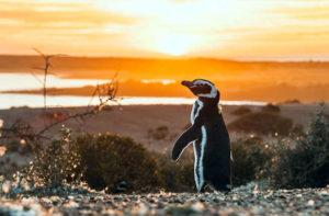 The 10 Coolest Animals You'll Encounter in Patagonia