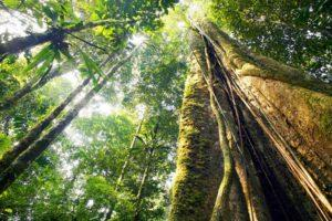 YOU HAVE BEEN WARNED: 15 Things NOT to Do in the Amazon Jungle