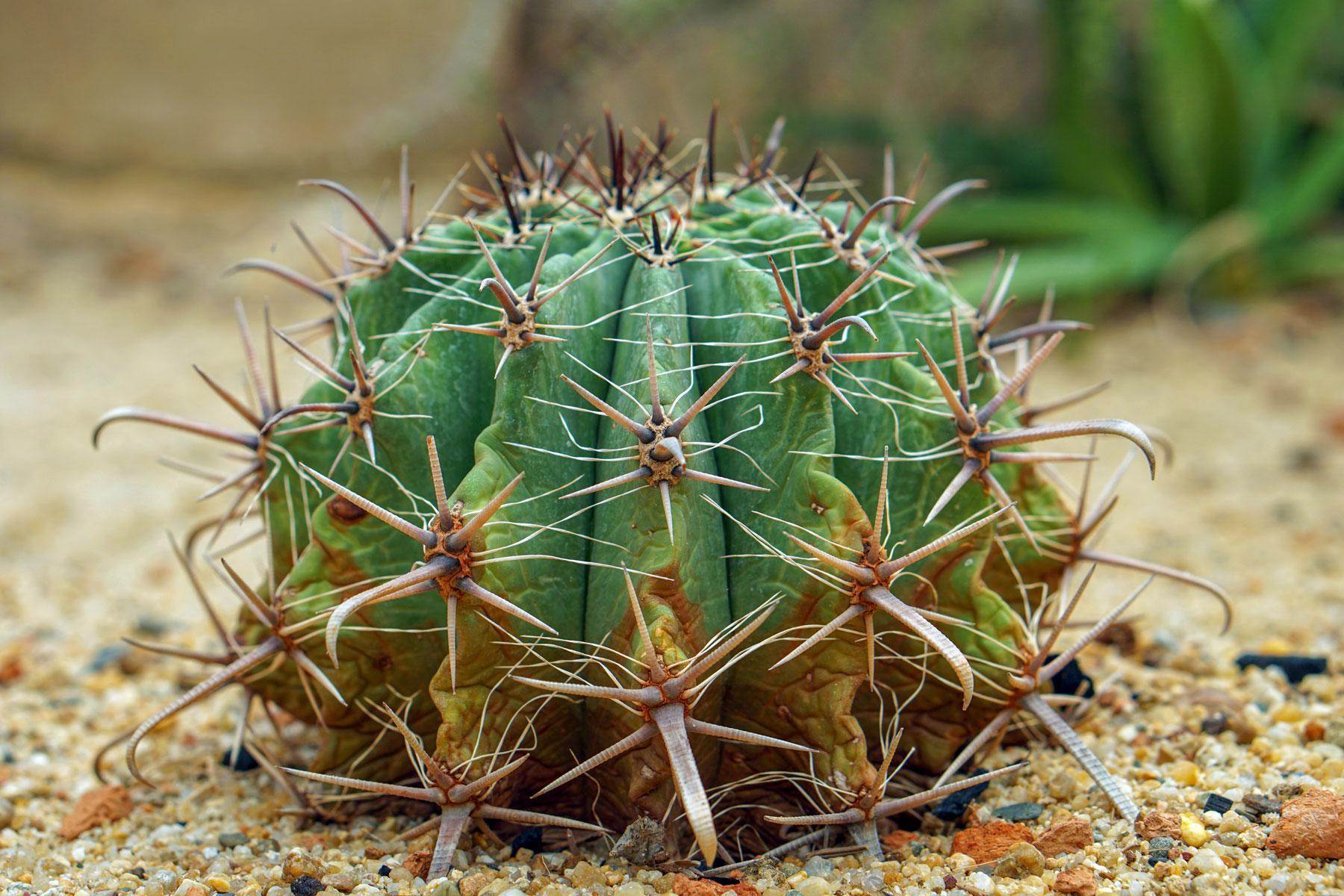 10 Coolest Cacti On Earth