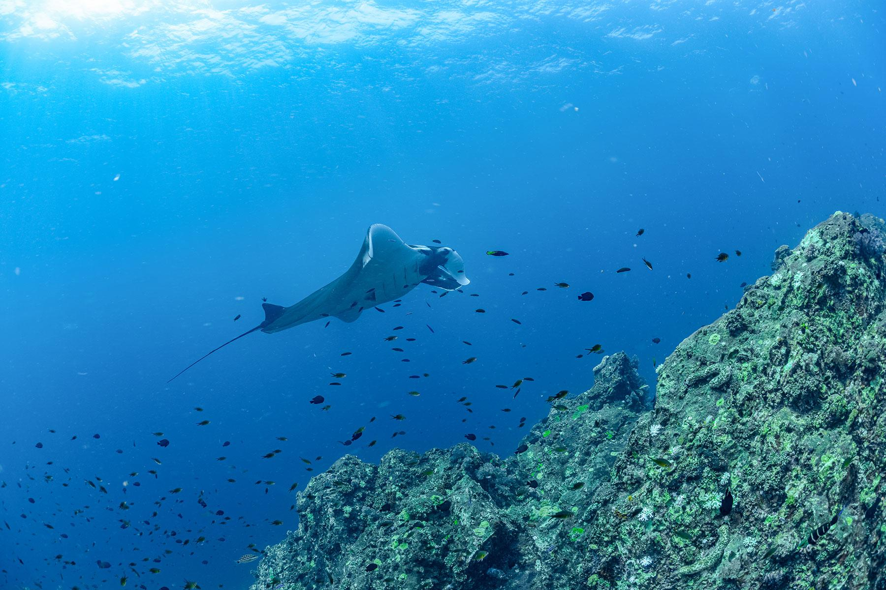 11_Thailand_Snorkeling_Diving_Hin_Daeng_dreamstime_133907232