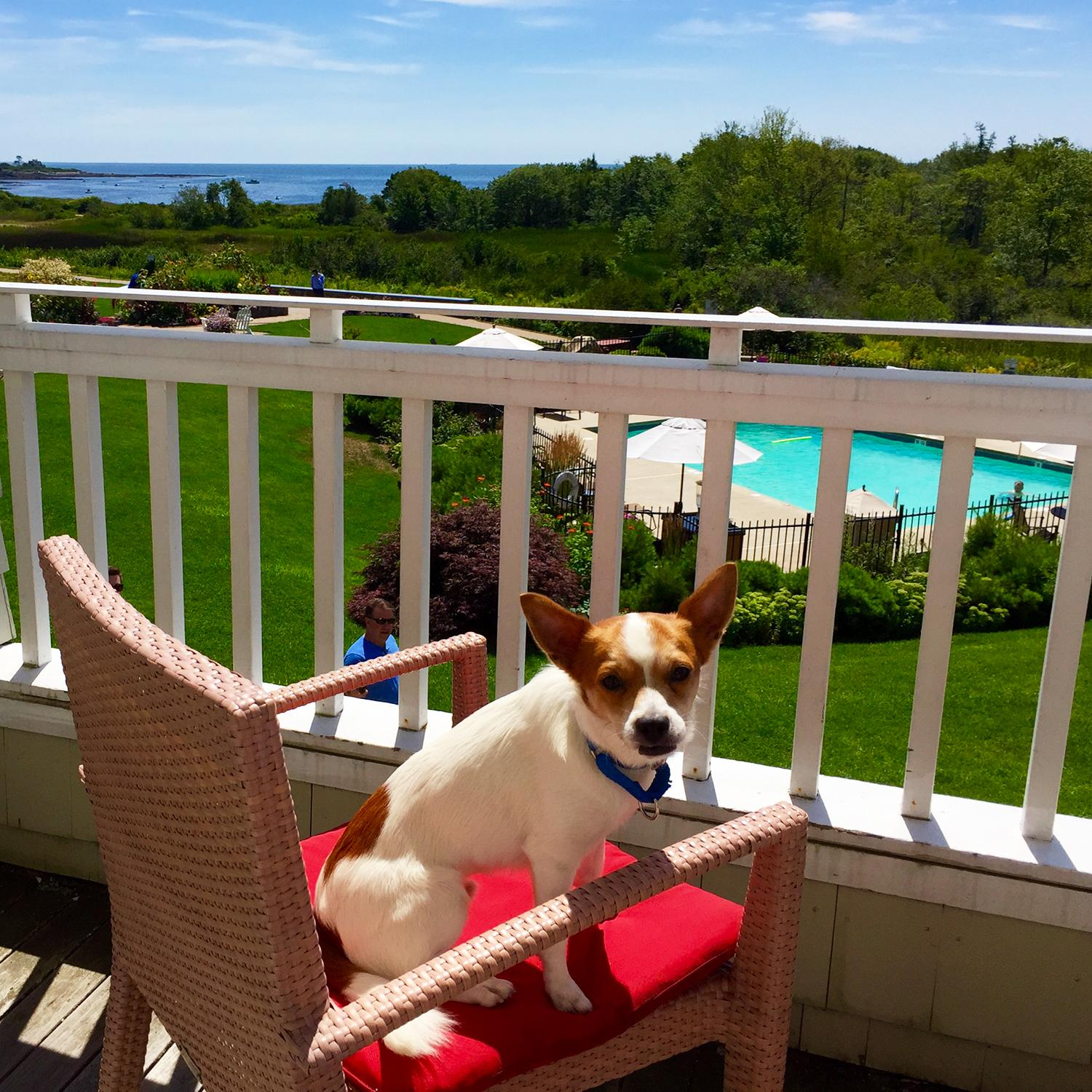 10 Hotels Connecting Guests with Rescue Animals