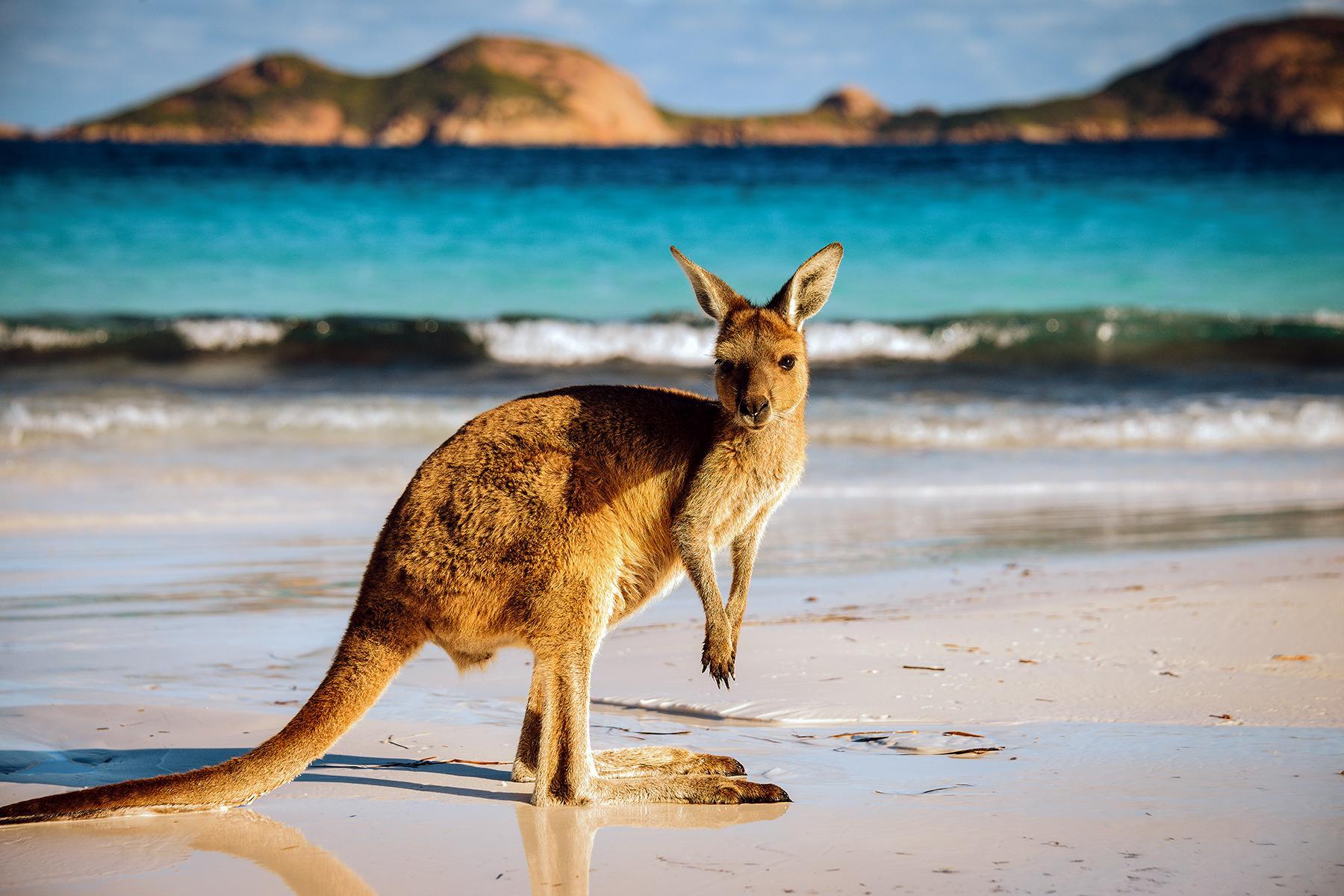 15_Australia_WTK_Vaccinations_shutterstock_603577658