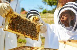 These Destinations Around the World Are Working Hard to Save Bees