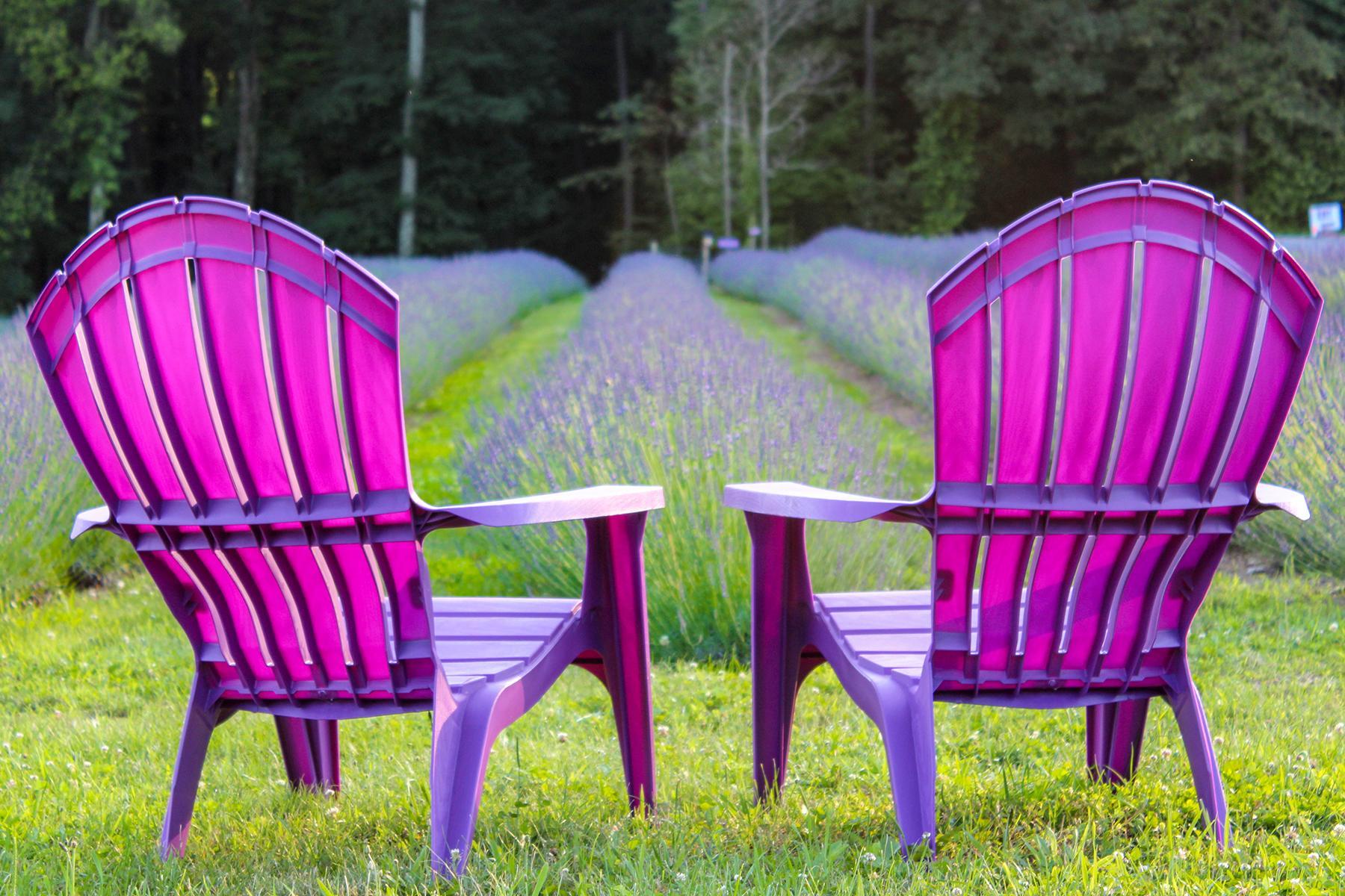 11 U S  Lavender Farms You Can Visit