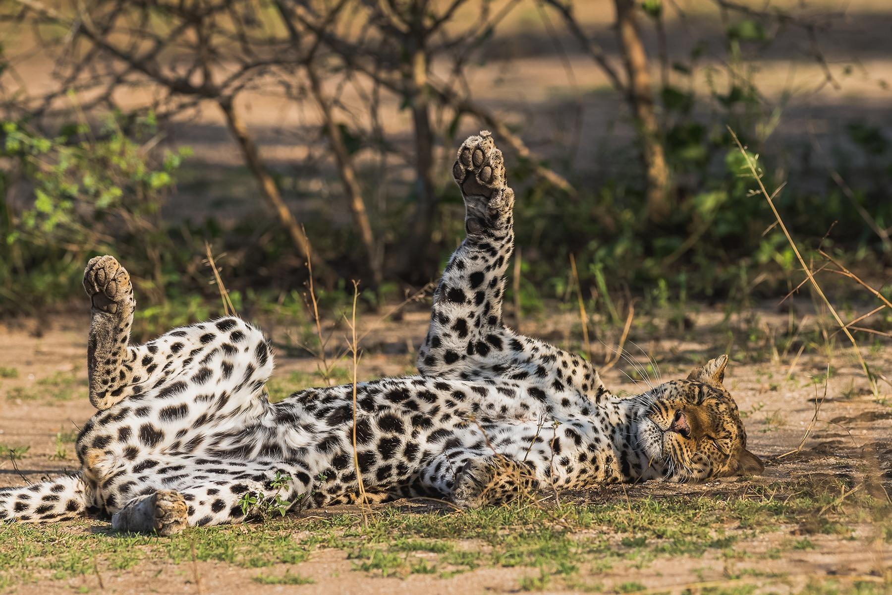 11 Animal Excursions in Uganda