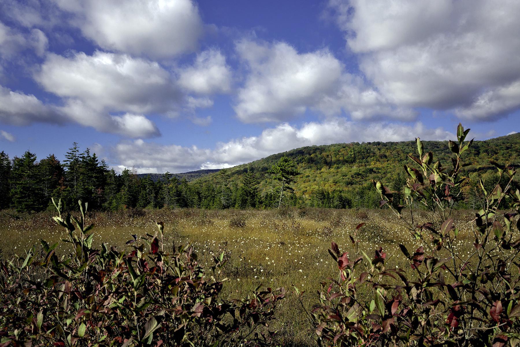 10_WestVirginia__CranberryGlades_10.) CranberryGlades2