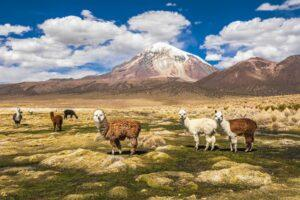 We're Convinced Bolivia is the Most Magical Place on Earth
