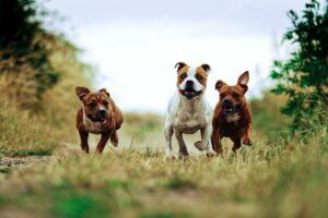Dog Destinations: Where to Visit the Pups You Won't See Anywhere Else