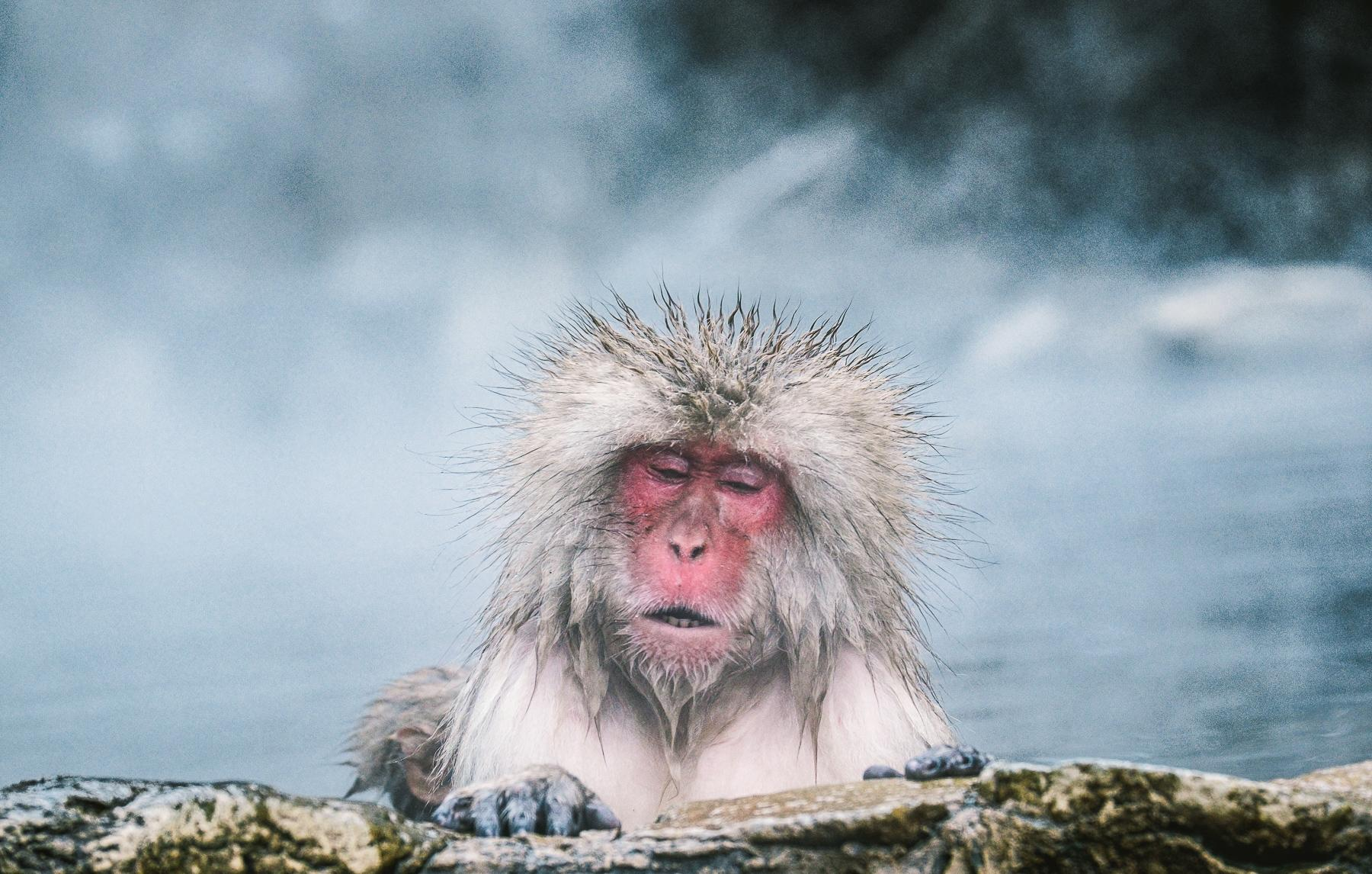 Image result for Japanese Snow Monkey!
