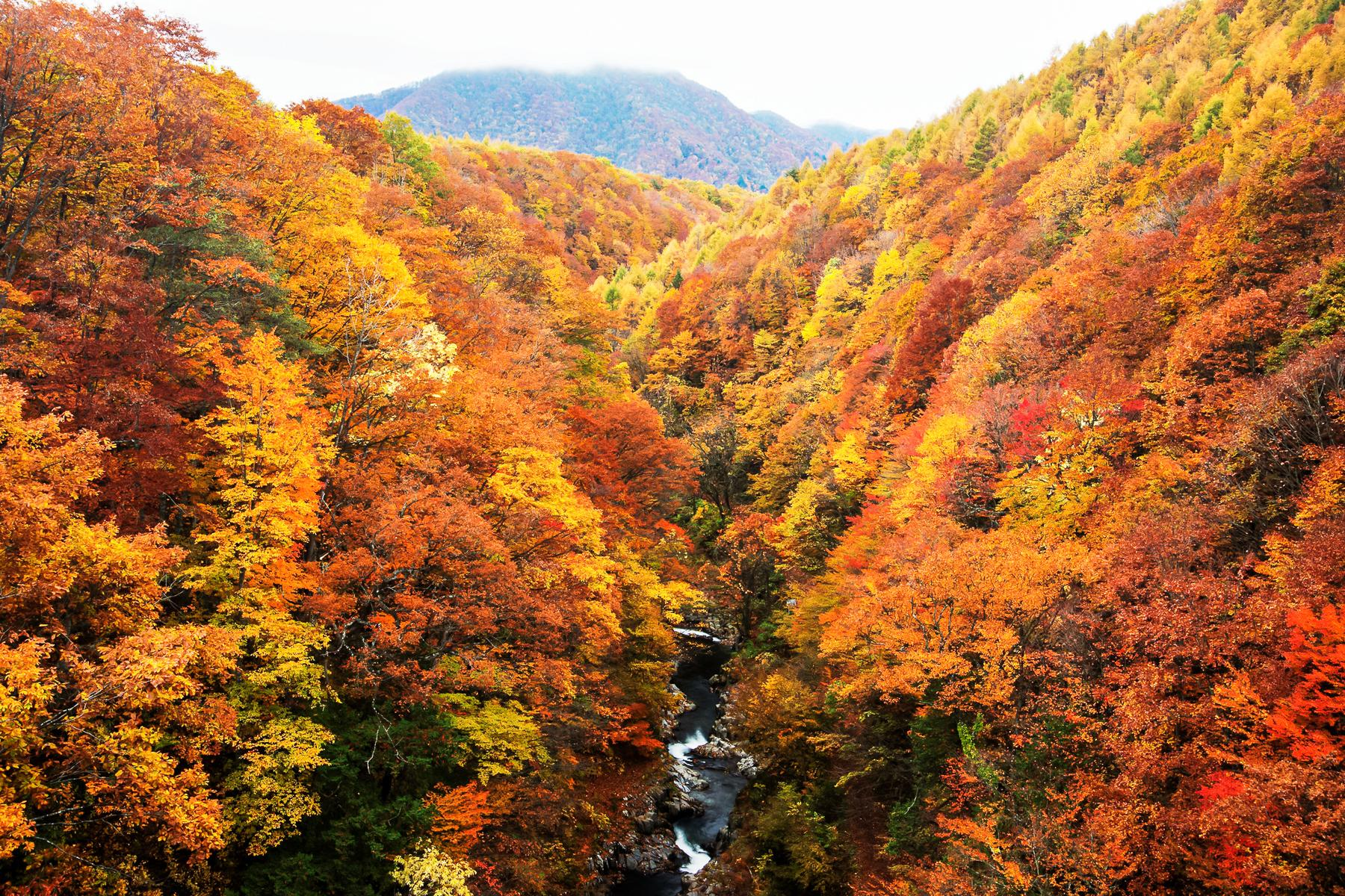 How to Plan and Execute the Perfect Fall Foliage Tour