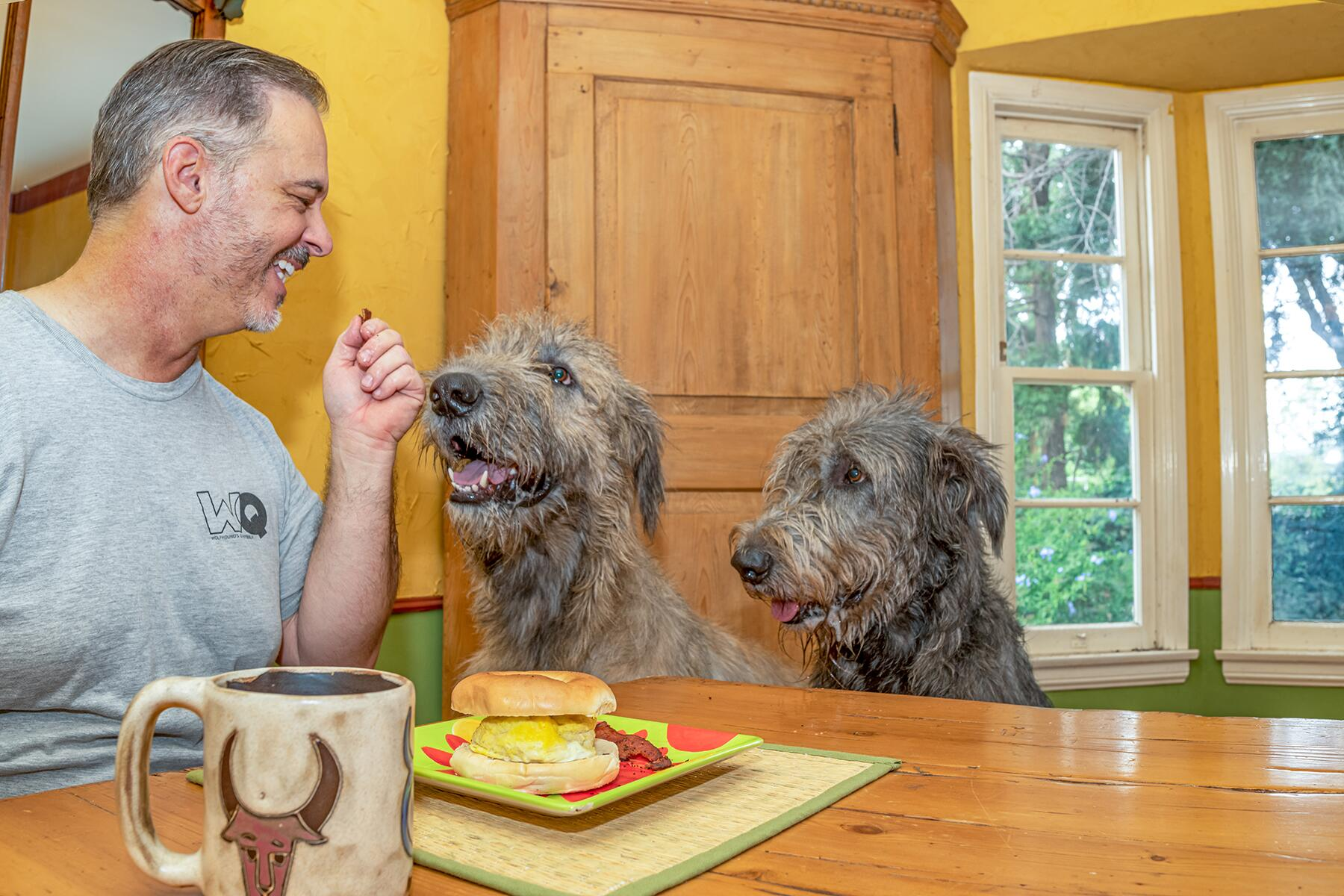dogs breakfast 1