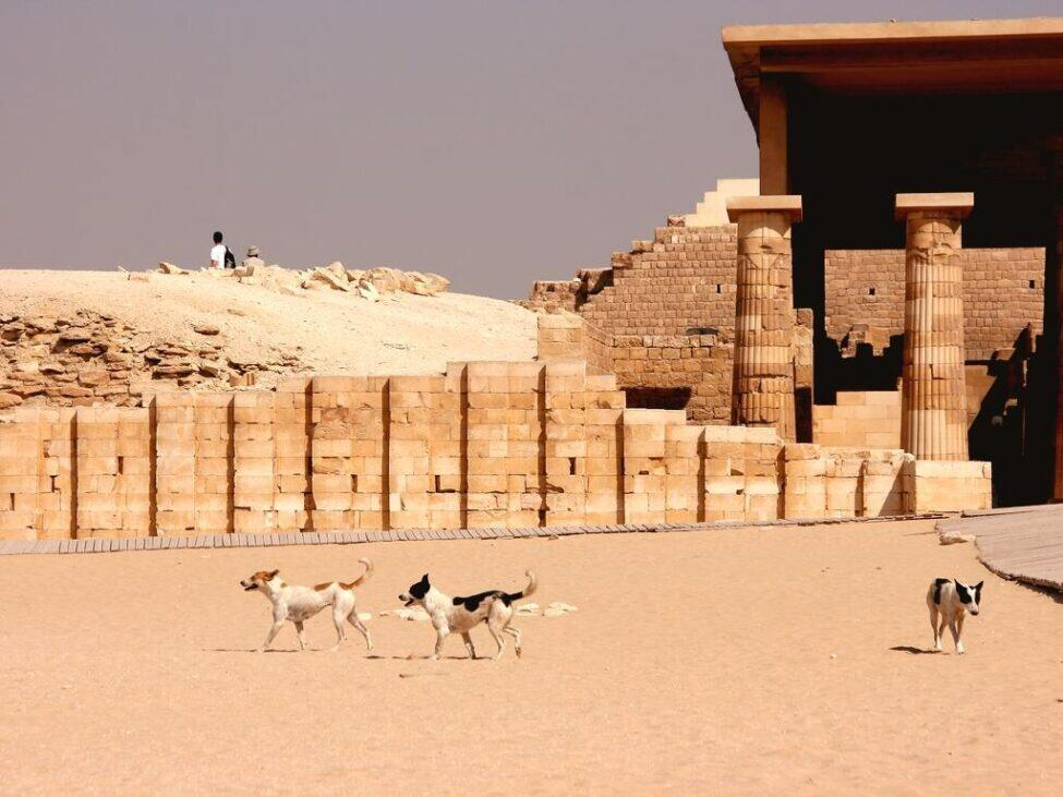 Advice to make your trip to Egypt smoother and more hassle-free.