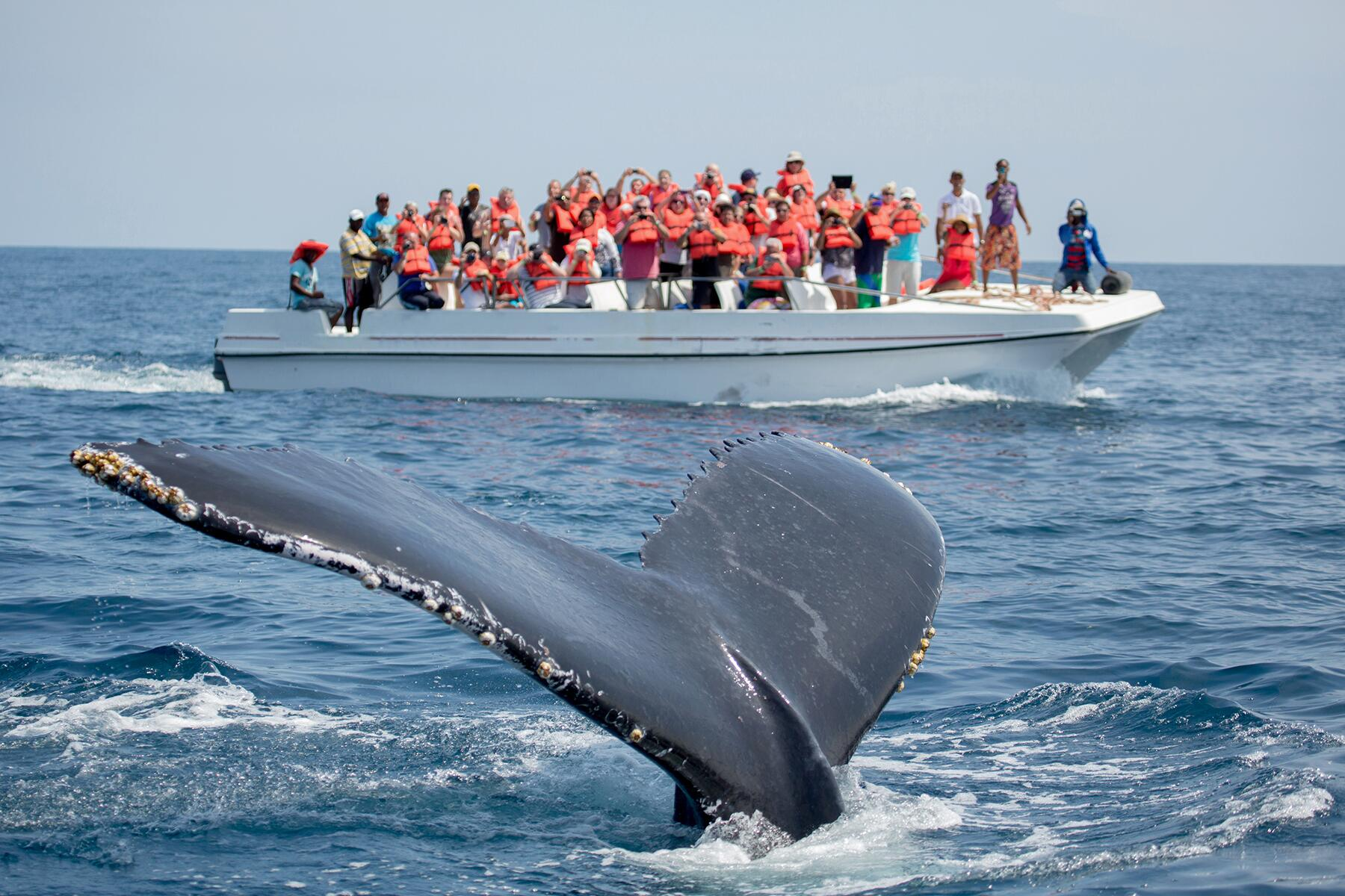 06_UltimateCaribbean__GoWhaleWatching_shutterstock_534311299