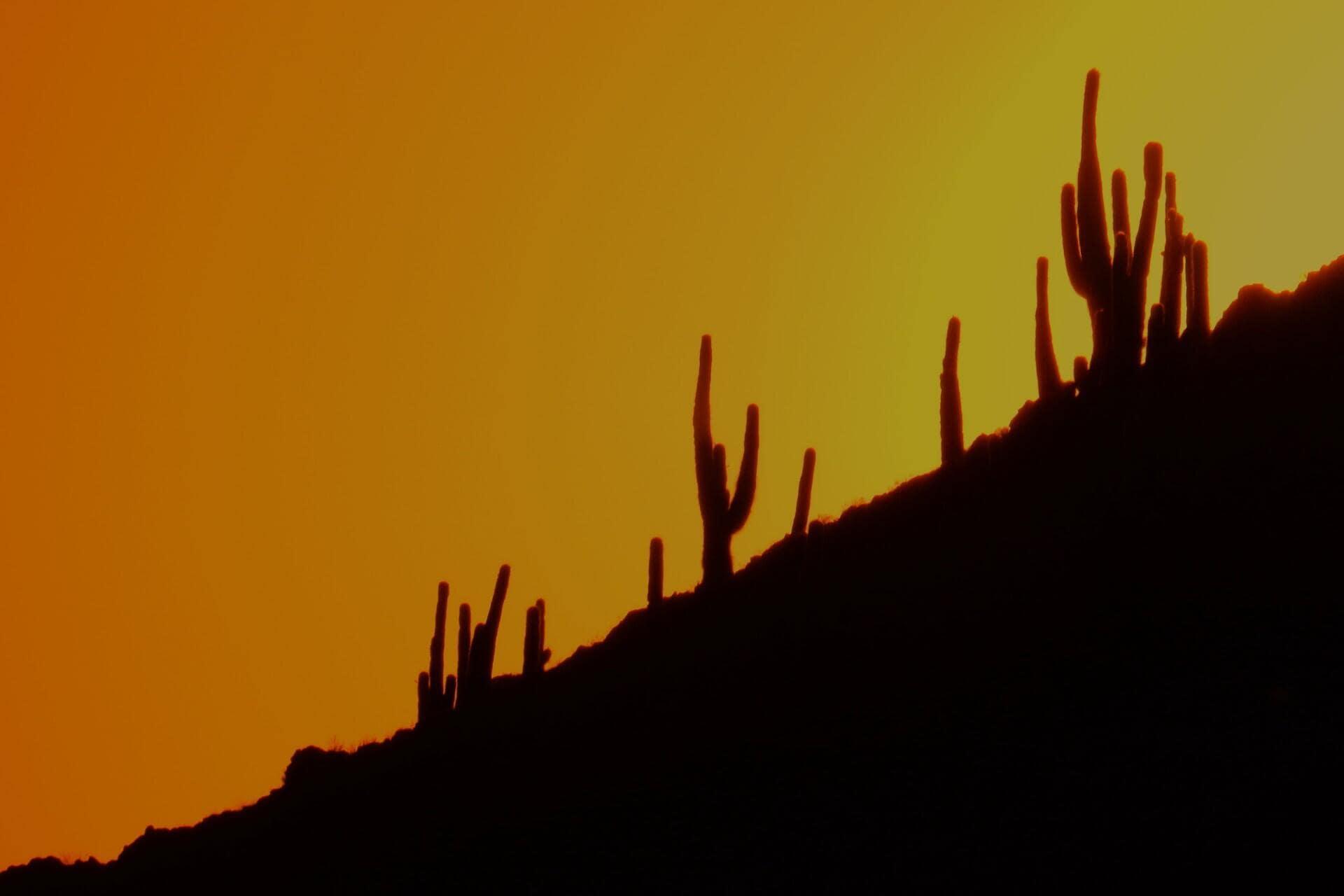 A-Desert-Love-Story -03 (1)
