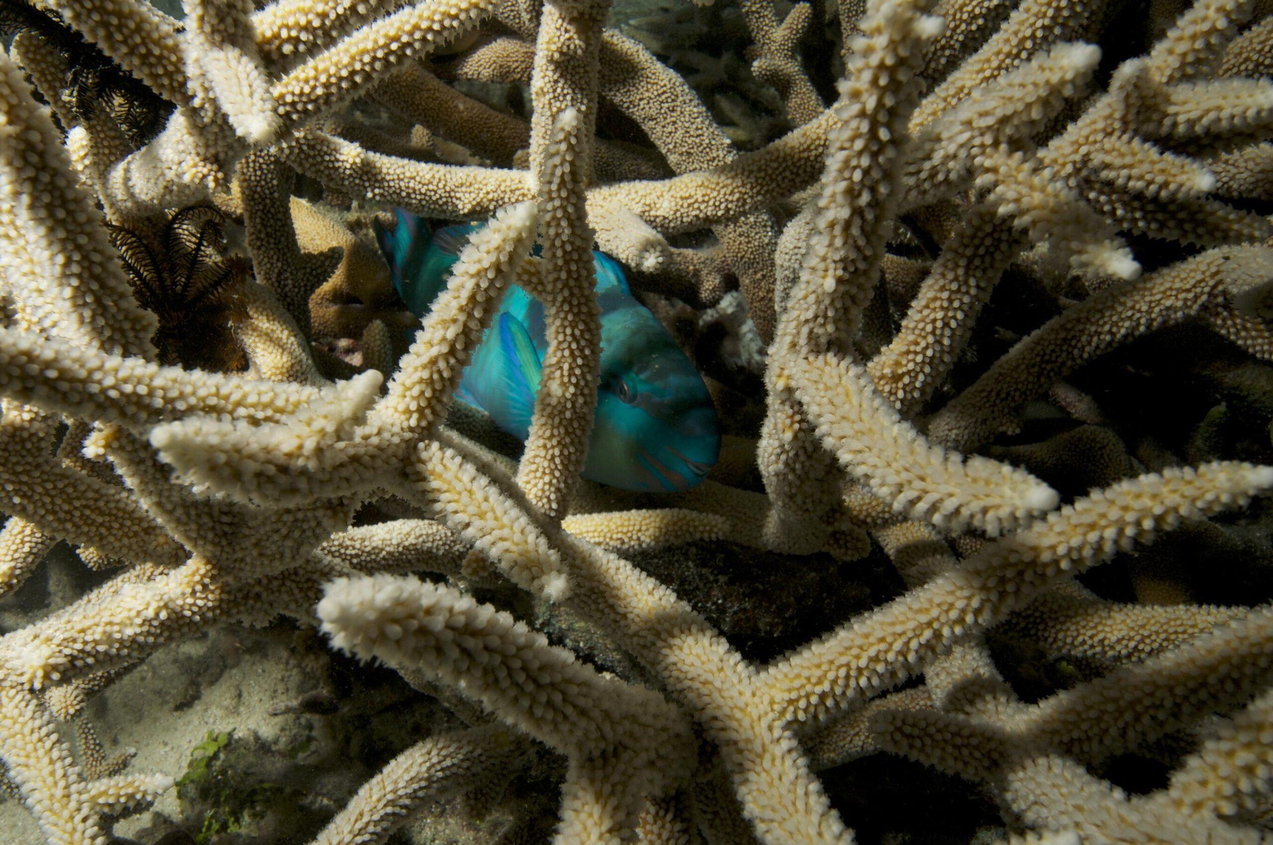 Coral Spawning in Tropical North Queensland_credit Biopixel TV (7)