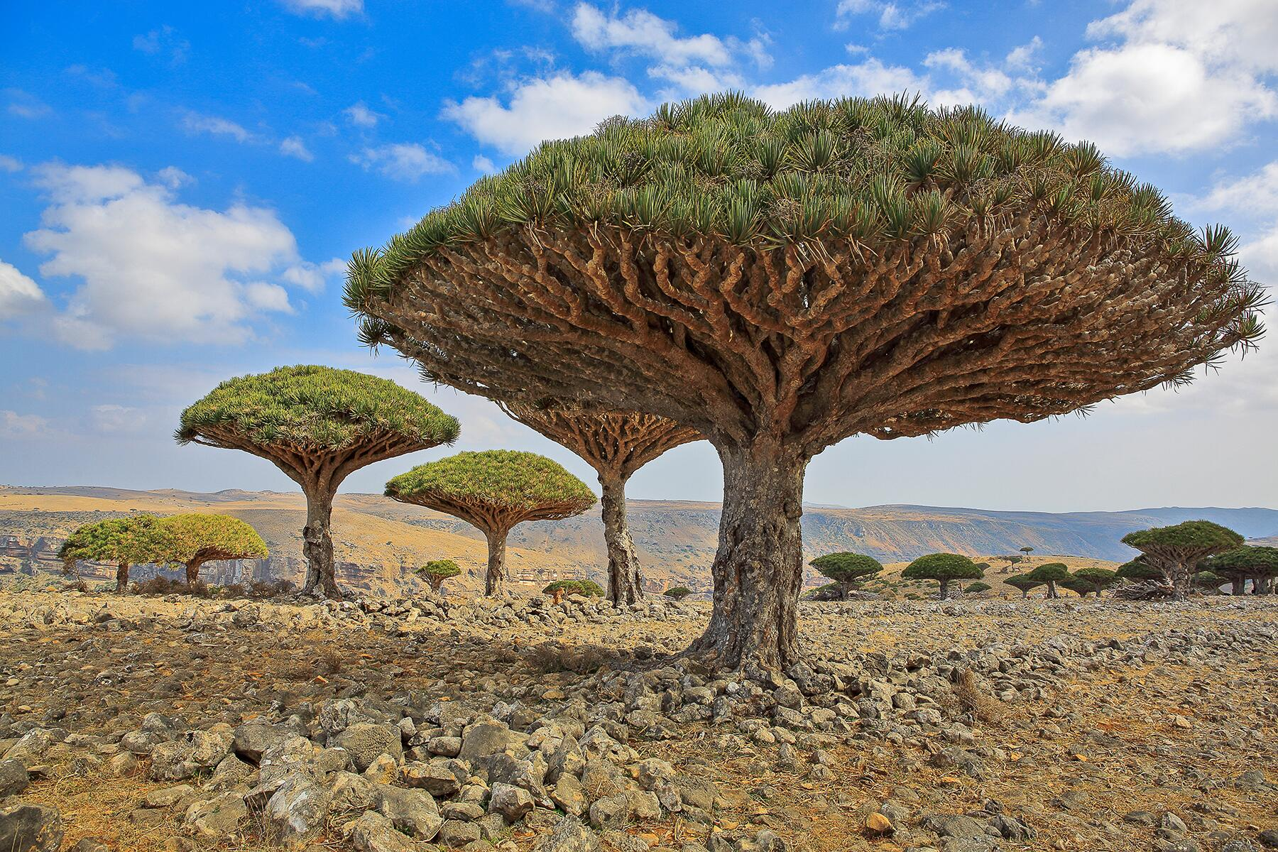 11 Bizarrely Beautiful Trees Around the World to Bring You a Moment of Peace
