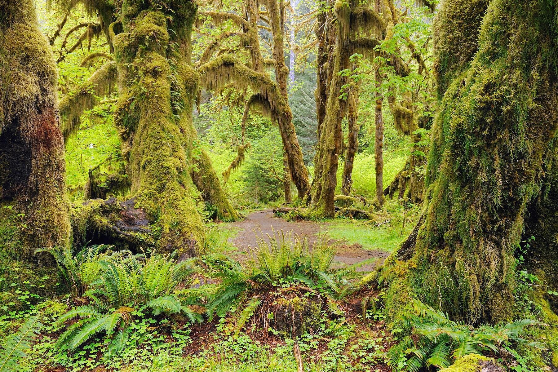 North Cascades to Olympic National Park, Washington