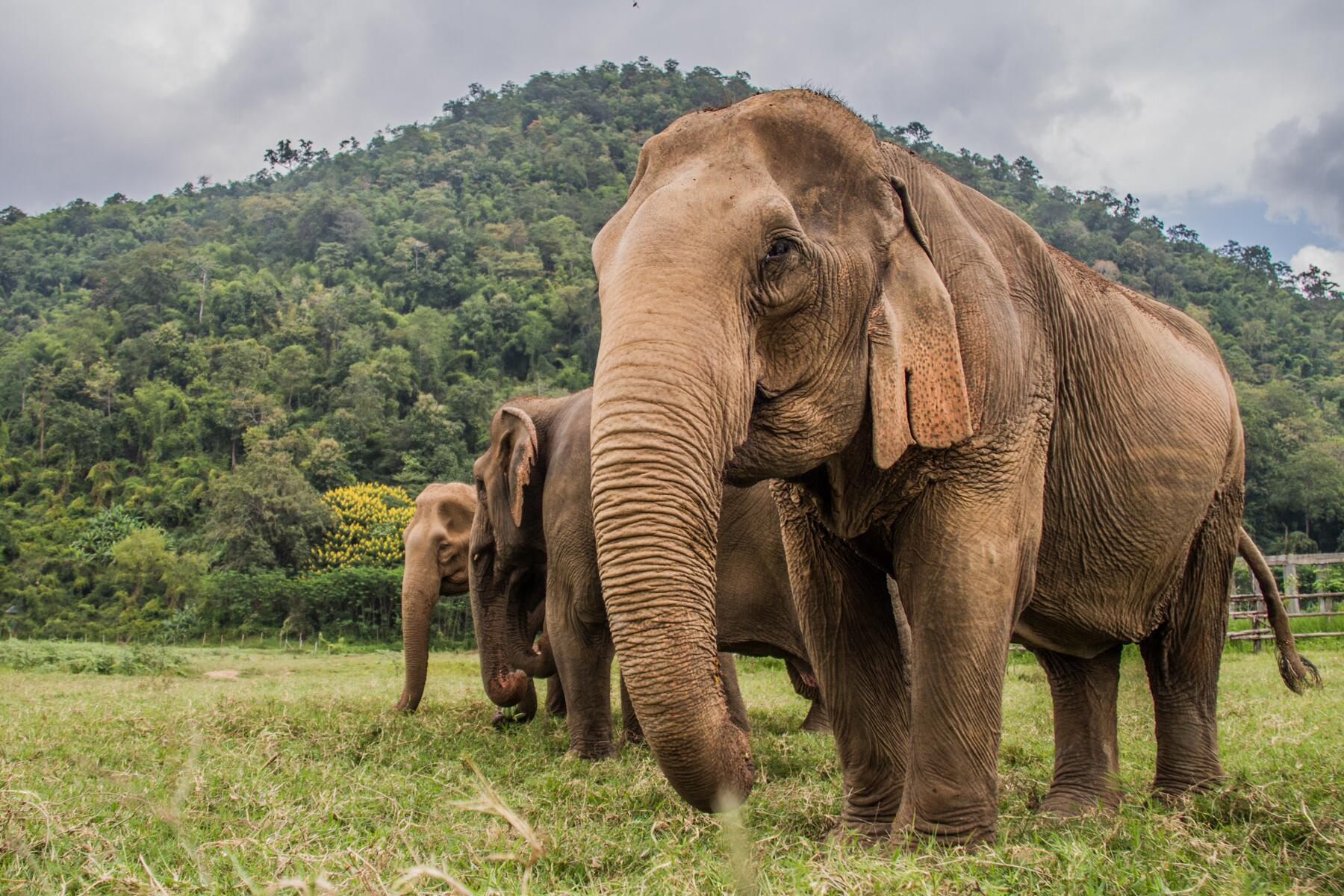 Elephant Tourism Is Way More Complex Than You'd Imagine: The Thailand  Example